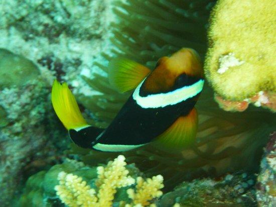 Jupiter Sunrise Lodge: Nemo gefunden