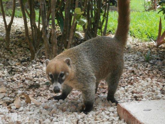 Viva Wyndham Maya: animalitos por los corredores del hotel