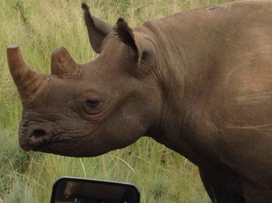 Legend Golf and Safari Resort: Close encounter with a rhino!