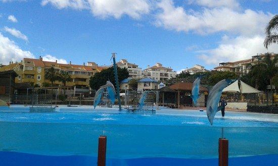 Selwo Marina: Dolphin show