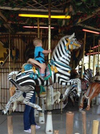 Tampa's Lowry Park Zoo: Carousel Zebra at Lowry Park Zoo