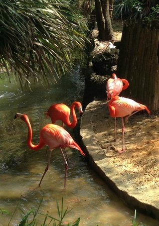 Tampa's Lowry Park Zoo: Flamingo Habitat at Lowry Park Zoo