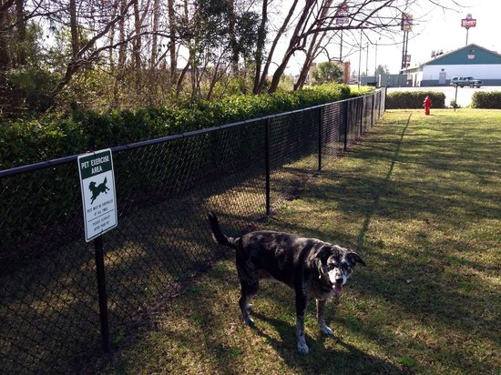 Hampton Inn Adel: Awesome fenced in pet exercise area Tallulah enjoying some off leash time !