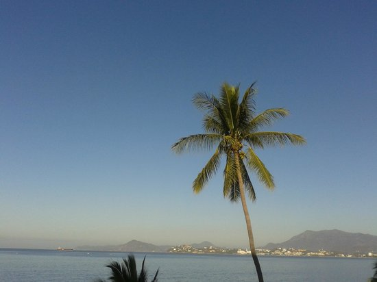 Hotelito Escondido Manzanillo: palma