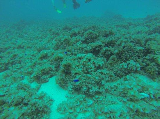 Ocean Spirit Dive Center : Aquairum pereybere