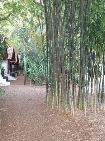 Milky Bay Resort : Garten