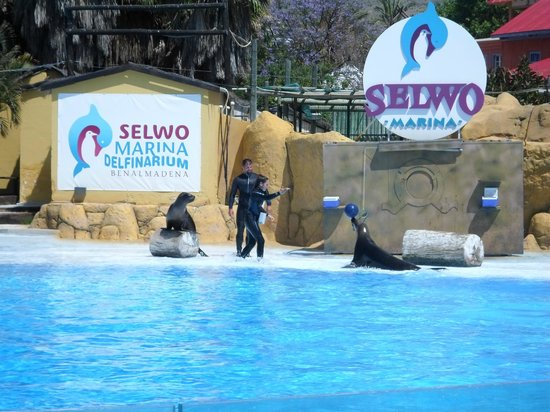 Selwo Marina: The seals playing with a ball