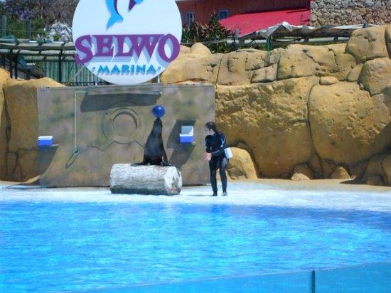 Selwo Marina: Seal and ball