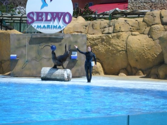 Selwo Marina: Seal and ball and a handstand?