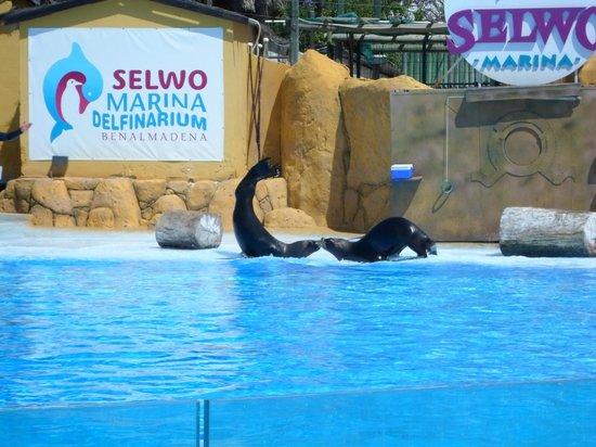 Selwo Marina: Kissing seals!