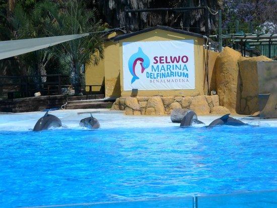 Selwo Marina : Dolphins !