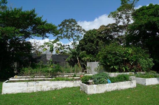 Crater Valley: Hotel's vegetable garden