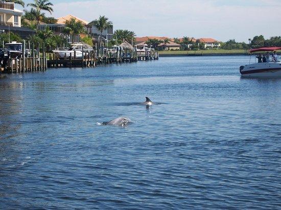 Banana Bay Tour Company Day Tours: Les dauphins jouaient autour du bateau