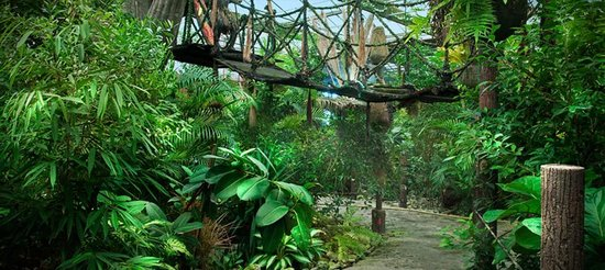 The Jungle: entry way