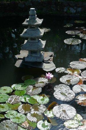 Crater Valley: Japanese garden