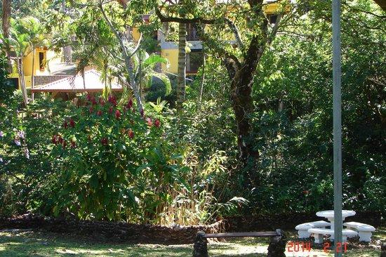 La Terraza Guest House B&B: garden