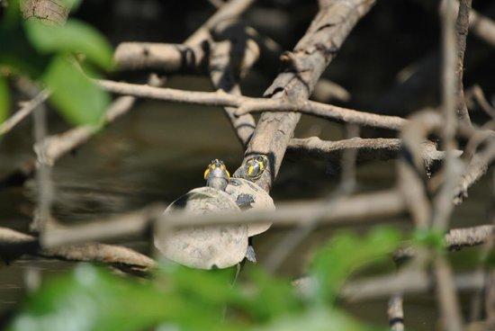 Inkaterra Reserva Amazonica: Fauna del Lago Sandoval