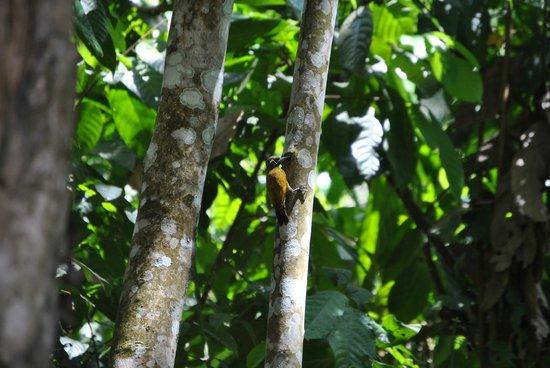 Inkaterra Reserva Amazonica: Fauna alrededores del hotel
