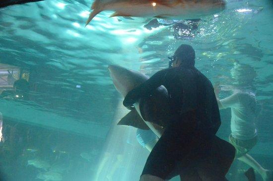 Hotel De Cima: Nado con tiburones