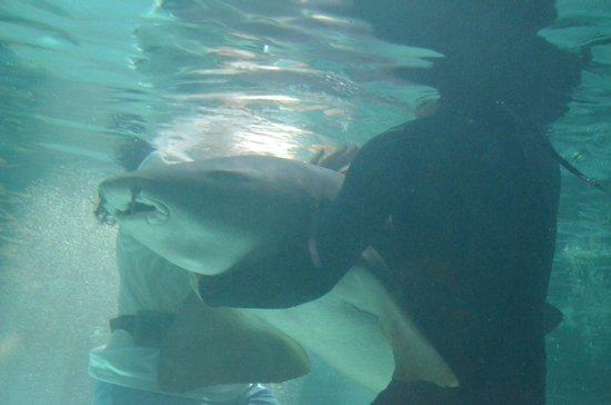 Hotel De Cima: nadando con turibuones