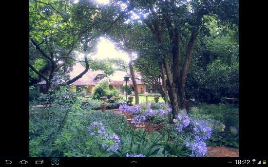 The Village Guest House: Our garden is a big attraction for bird and nature lovers.