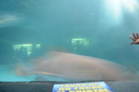 Hotel De Cima: acuario