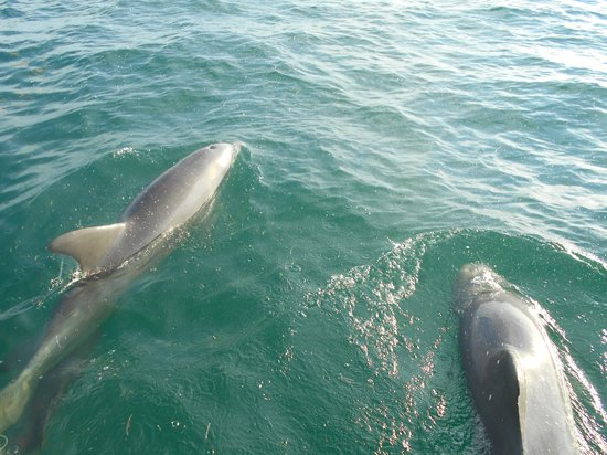Dolphin Watch: Mom and Babe