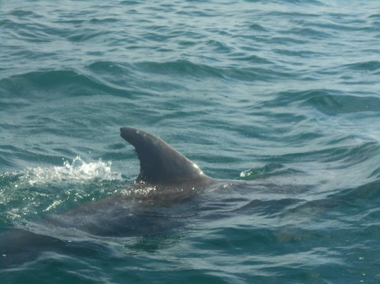 Dolphin Watch: Right with us!