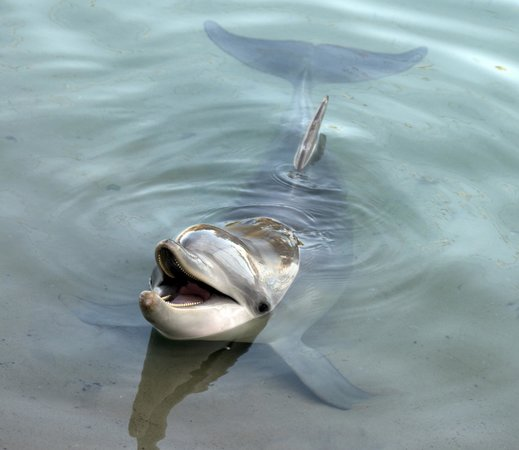 Tybee Island Marine Science Center : Dolphin