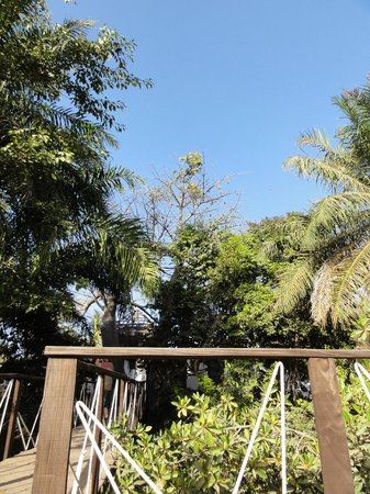 Bakotu Hotel : nature