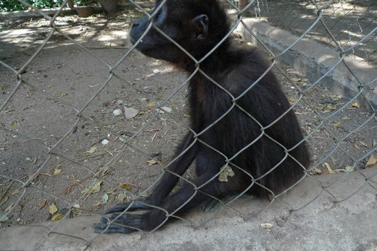 El Nispero Zoo and Botanical Garden: Monkeys in a relatively small cage