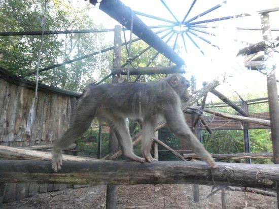 Un Macaco Foto Di Giardino Zoologico Di Pistoia Pistoia