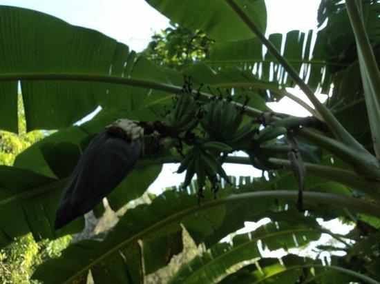 """EcoLodge """"La Bonita"""": Wunderschoene Pflanzenwelt auf dem Hotelgelaende"""