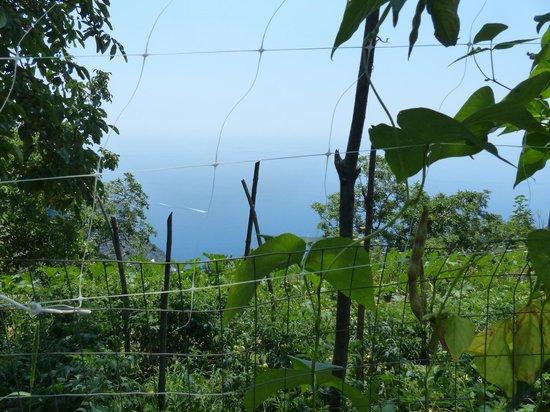 Casa Cuccaro B&B : view