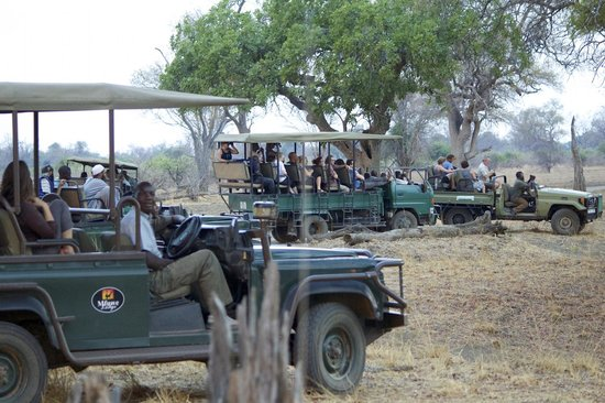 Mfuwe Lodge - The Bushcamp Company: Unfortunately the norm around big sightings while we were there