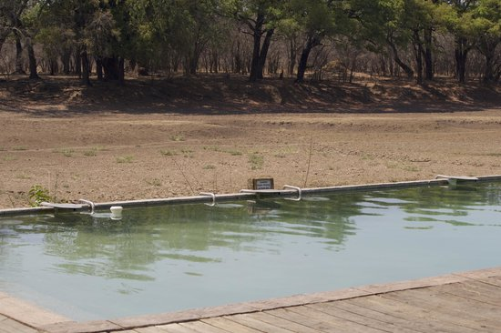 Mfuwe Lodge - The Bushcamp Company : View from the pool