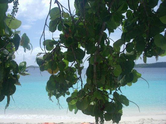 Honeymoon Beach: Nice shade trees