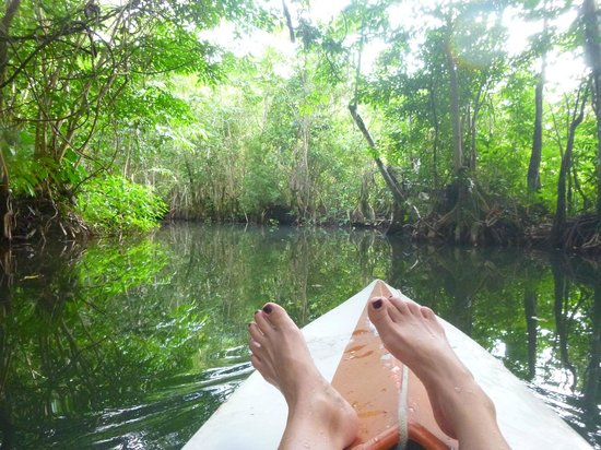 Finca Tatin Hotel: kayaking through mangroves aaaayyyyy bliss