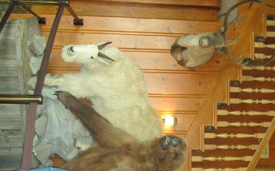 Yellowstone Park Hotel : hall proximo a recepçao