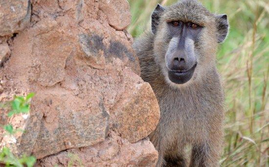 Secretary Bird Kenya Safaris, Day Tours : say cheese