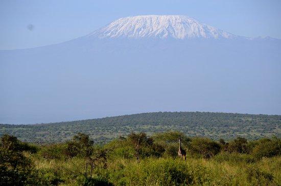 Secretary Bird Kenya Safaris, Day Tours : the highest animal under the highest mountain
