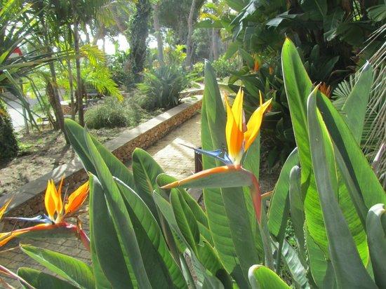 Cueva de Nerja: nog een stukje van de tuin rondom