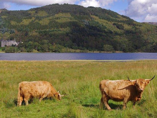 Loch Achray Hotel : Hotel Cattle and Loch view