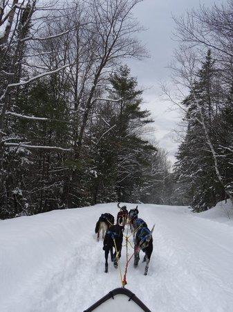 Telemark Inn Wilderness Lodge: A beautiful day