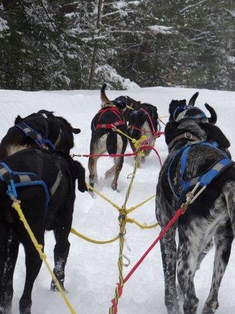 Telemark Inn Wilderness Lodge: Sledding
