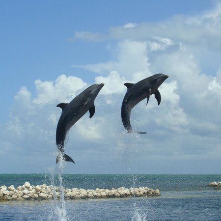 Dolphin Cove Cayman : wow
