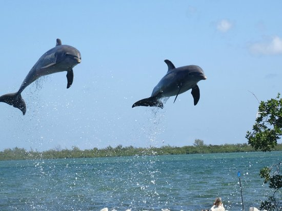 Dolphin Cove Cayman : simply breathtaking