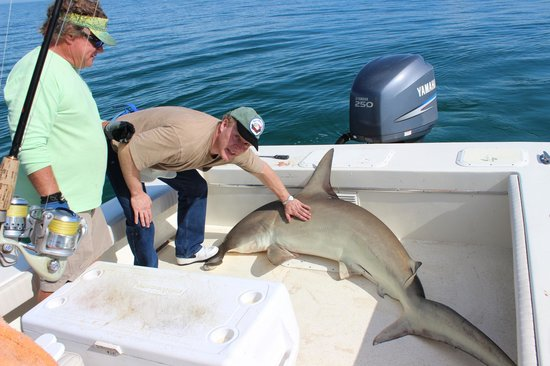 """Ms.B.Haven Fishing & Eco Charters : """"Don't let the shark on the boat,"""" Captain Mike says..."""