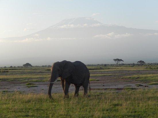 Amboseli Serena Safari Lodge: Elephant, Mt. Kilimanjaro in the Background