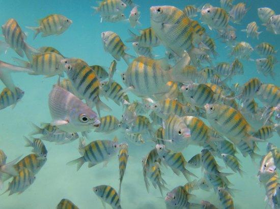 Riviera Adventours: Surrounded by fish at Yal-Ku Lagoon
